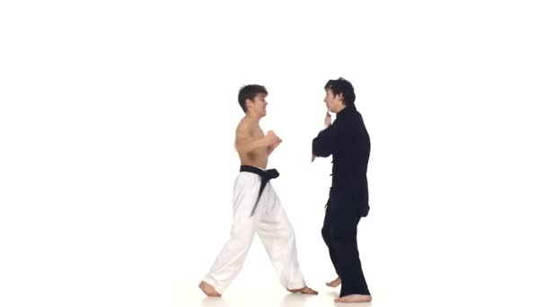Sparring taekwondo on a white background