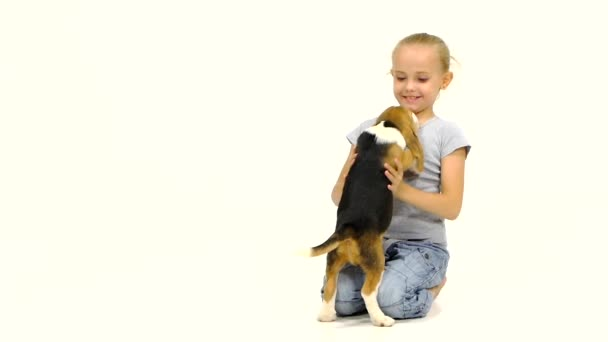 Cute little Beagle puppy sitting on a girls lap. Slow motion