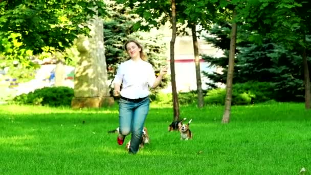 Beagle dogs running across the grass summer day.  Slow motion