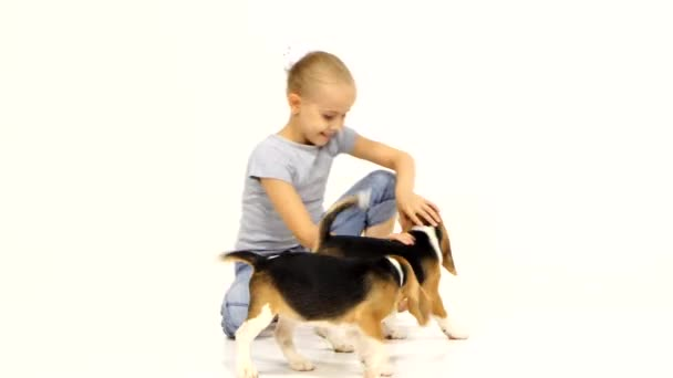 little girl played with Beagle puppy