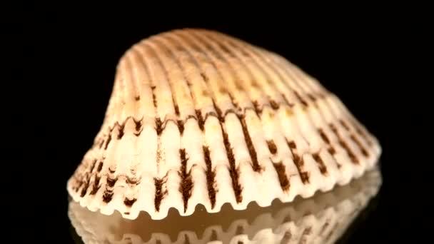 bunte Muschel isoliert auf einem schwarzen, Rotation, Nocken bewegt sich nach rechts