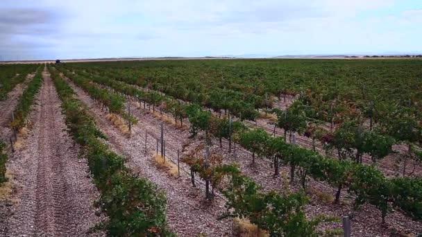 Gyönyörű szőlő mező