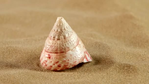 ungewöhnliche rosa Meeresmuschel mit Sand auf Schwarz, Gegenlicht, Drehung, Nahaufnahme