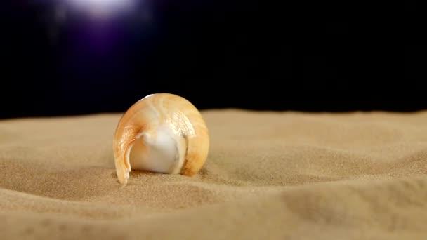 lange Muschel mit Sand auf Schwarz, Drehung, Nahaufnahme