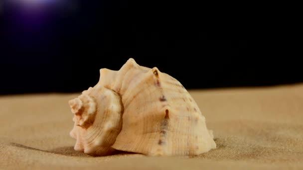 ungewöhnliche Meeresmuschel auf Sand, schwarz, Rotation, Nahaufnahme