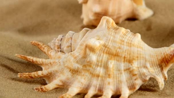 Top of different sea shellsand starfish on beach sand, black, rotation, close up, macro