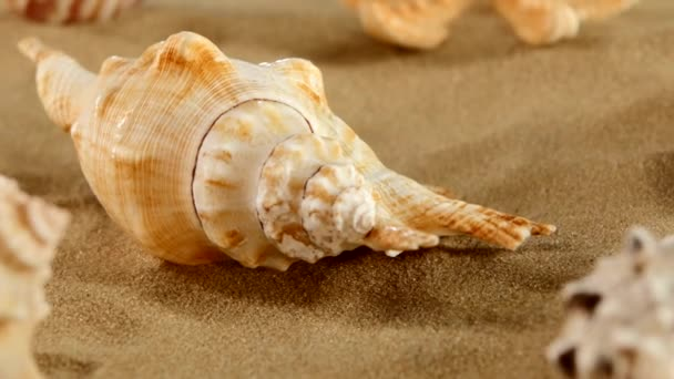 Side of different sea shellsand starfish on beach sand, black, rotation, close up, macro