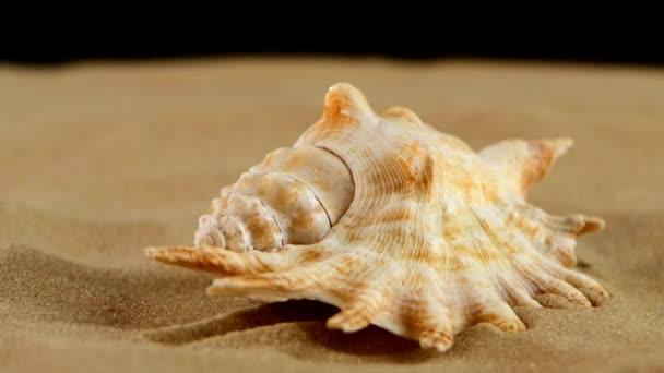 hellbraune Muscheln mit Sand und Gegenlicht, Rotation, auf schwarz