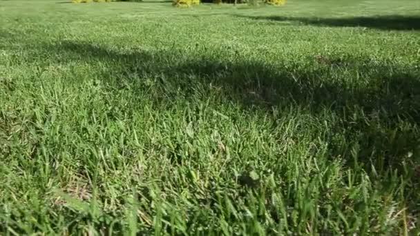 Zelený trávník za pozadí. Dolly zastřelil