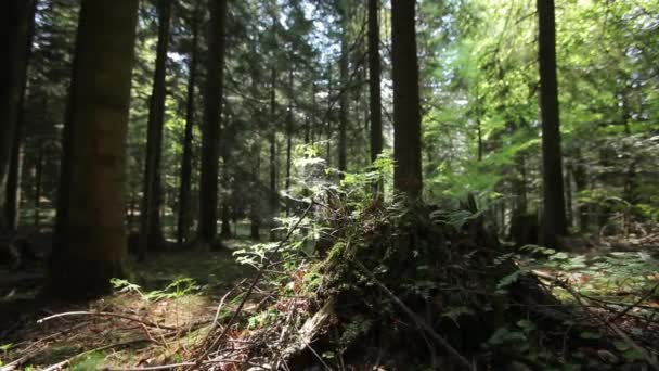 Ferns and Stump in the Forest