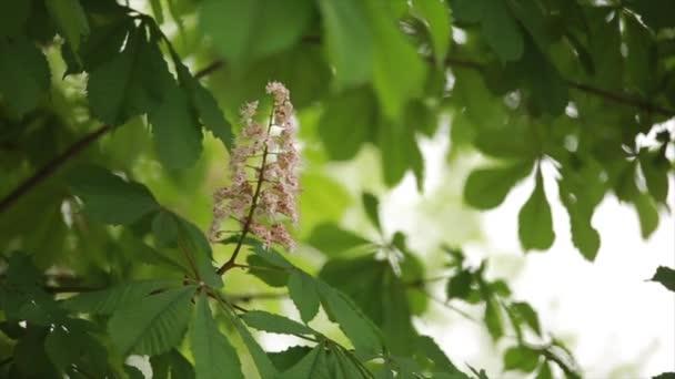 šelest listí na stromech