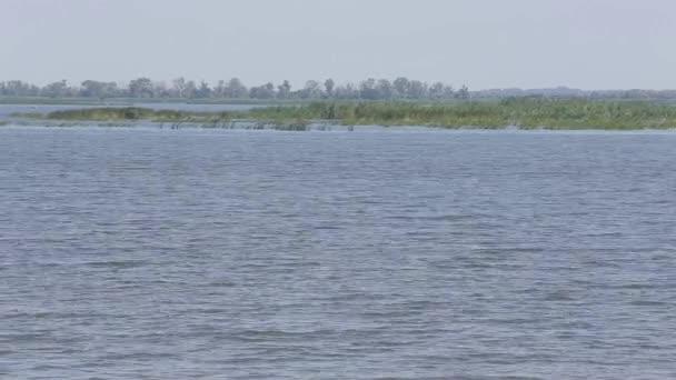 Přirozené pozadí zelené rákosí proti perlivá voda