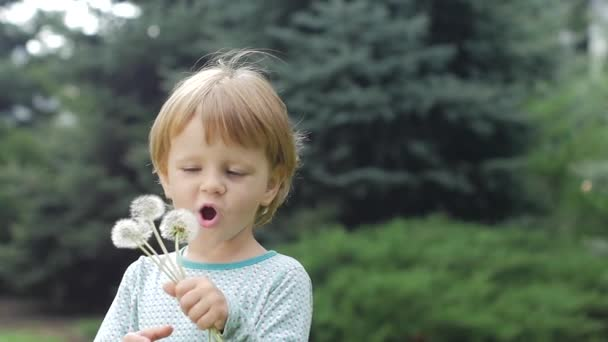 little curly girl playing with dandelion, Slow motion