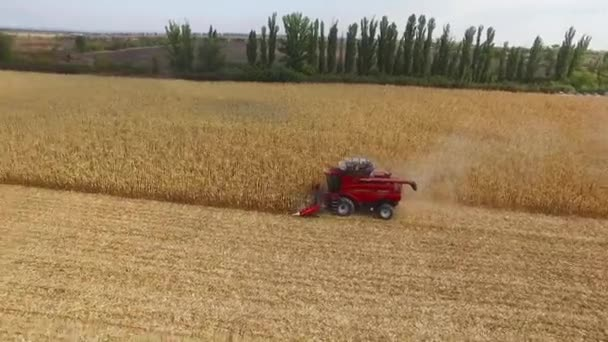 Dnepropetrovsk, Ukraine - October 4, 2015: Combine machine is harvesting oats on farm field corn. aerial shot, field corn