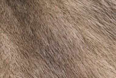 Mink fur background