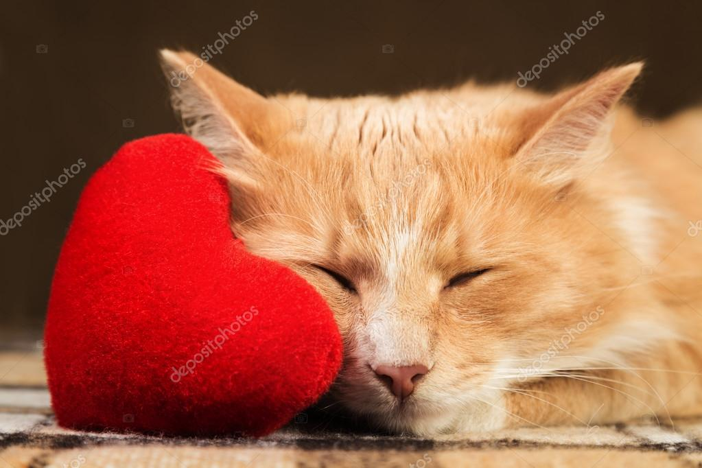 Red fluffy cat asleep hugging soft plush heart toy