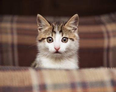 Cute kitten peeking out of a chair