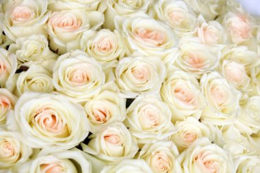Isolated close-up of a huge bouquet of white roses stock vector