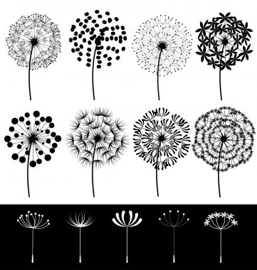 Dandelions set vector