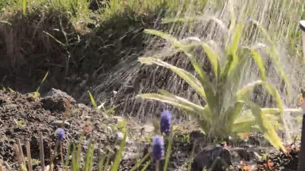 zalévání rostlin v zahradě