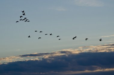 Flock of Geese Flying Across the Morning Sky