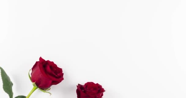 Állítsd le a mozgást. Piros rózsák jelennek meg egy kört a fehér háttér. Fénymásolási hely