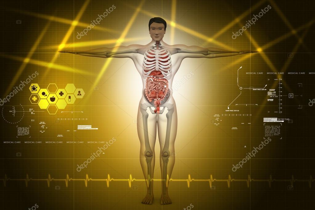 menschliche Anatomie — Stockfoto © cuteimage1 #56159673
