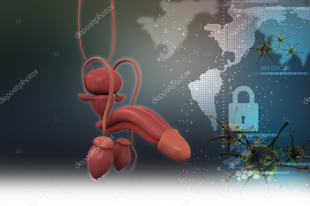 Anatomía del pene humano — Fotos de Stock © cuteimage1 #56193363