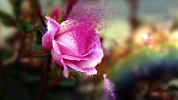 Rose s víly a motýli