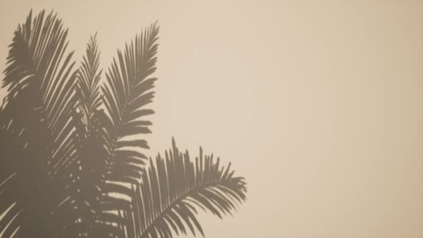 Shadow palm leaves overlay effect Tropical Sun light