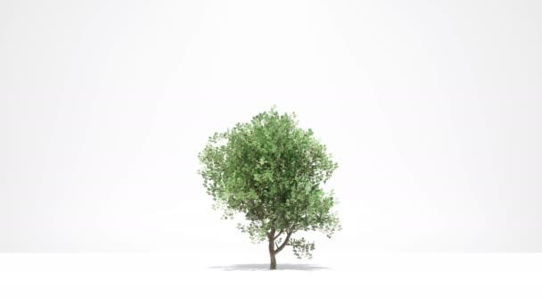 Fa növekedés fehér Új élet koncepció