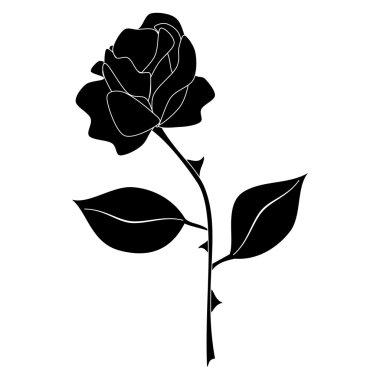 black rose vector on white