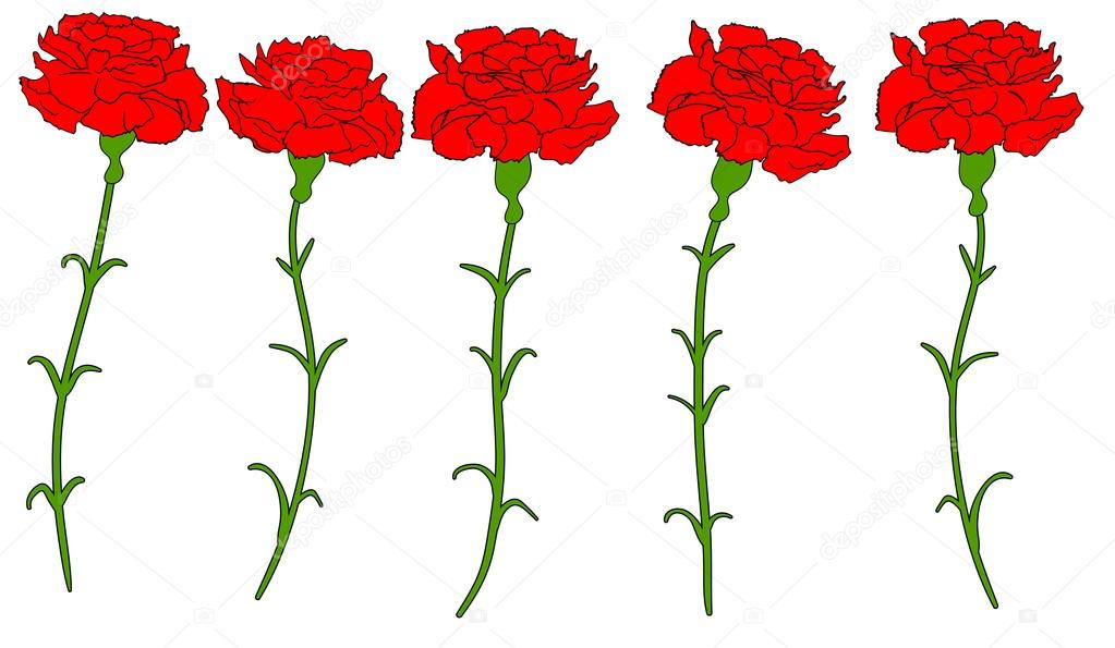 Beautiful red carnation isolated Vector 1