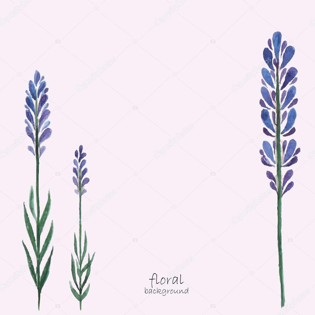 Lavender watercolor.