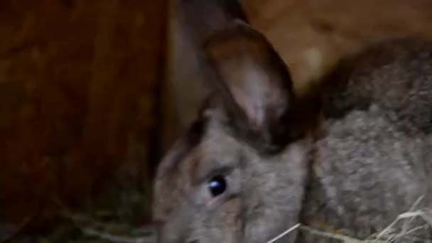 Kaninchen im Schuppen
