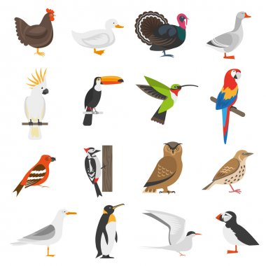 Bird Flat Color Icons Set