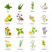 Léčivé byliny rostliny ploché ikony Set