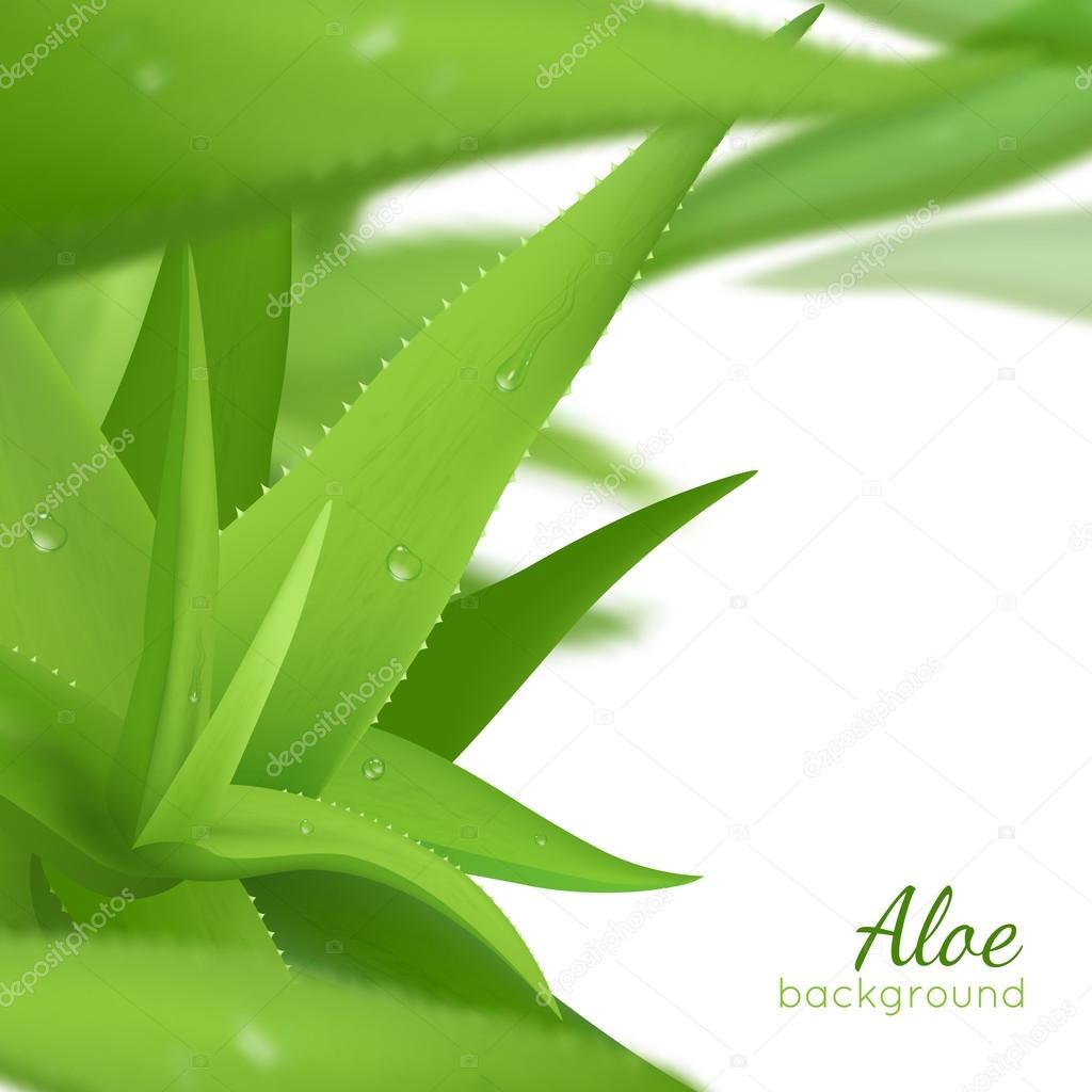 Green Aloe Vera Realistic Background