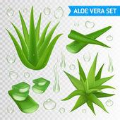 Fotografie Aloe vera rostlina na průhledném pozadí
