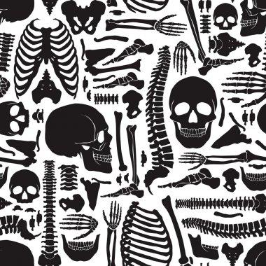 Human Bones Skeleton Pattern