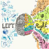 mozkové hemisféry skica