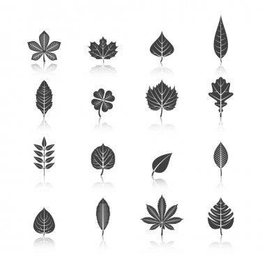 Plant Leaves Black Icons Set