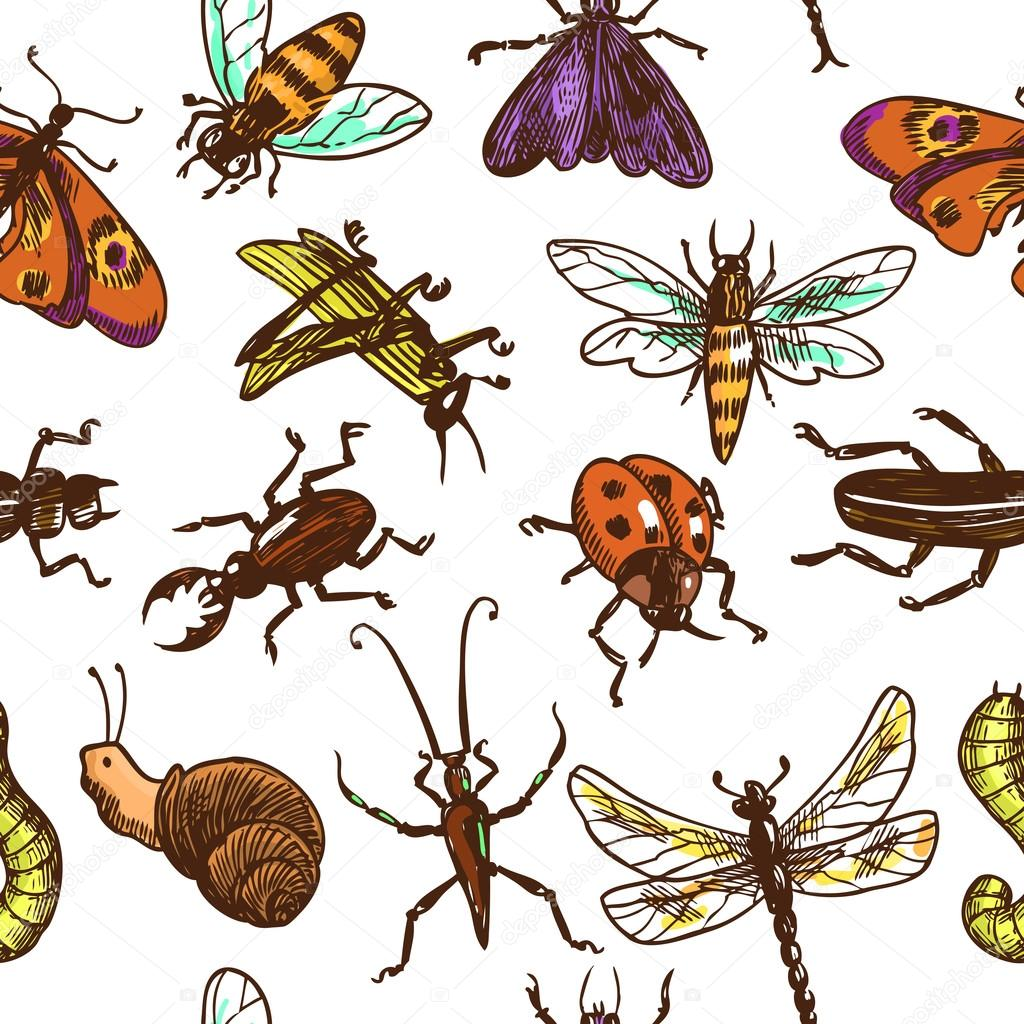 Insects sketch seamless pattern color — Stock Vector © macrovector ...