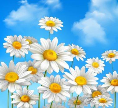 Daisies On Blue Sky