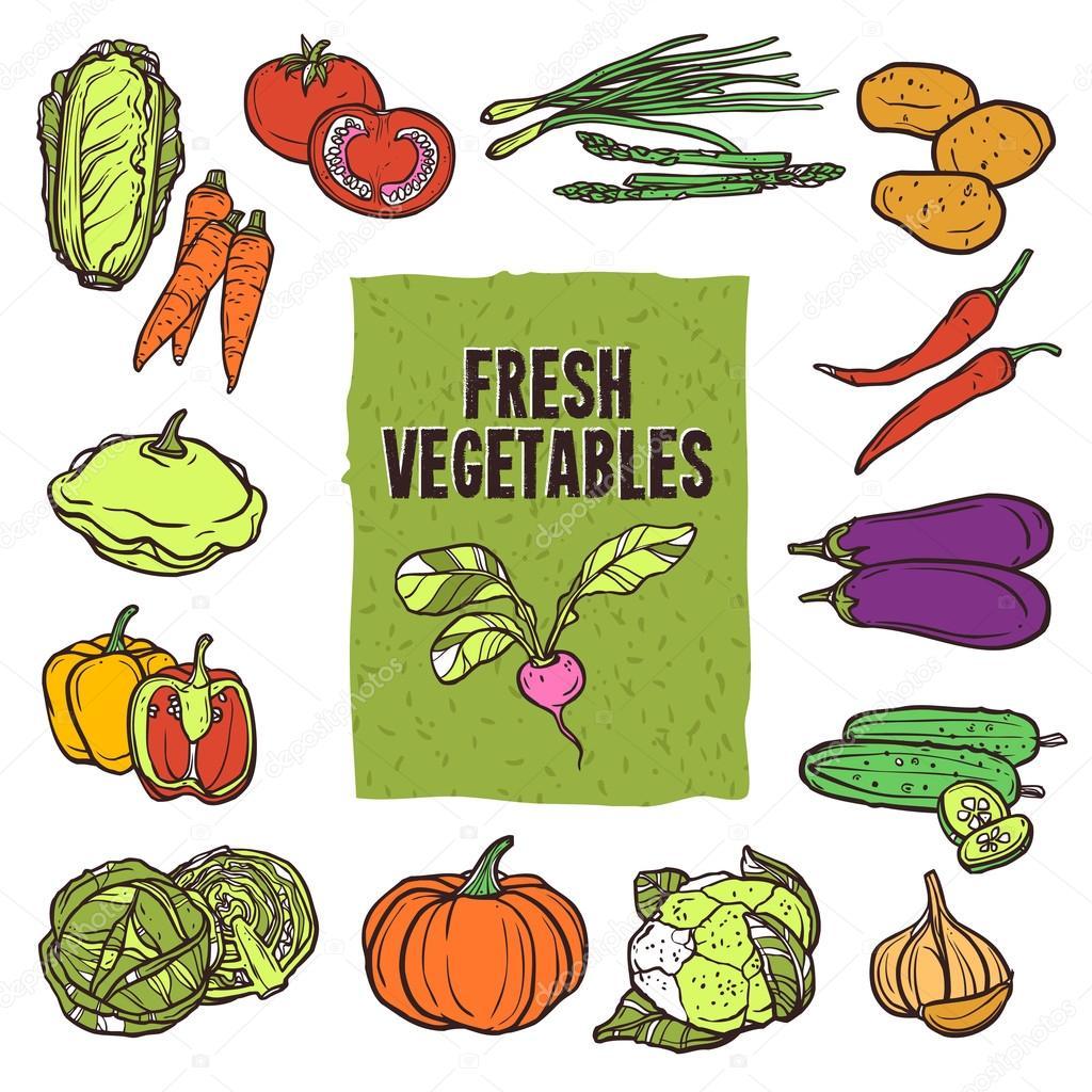 Vegetable Sketch Set