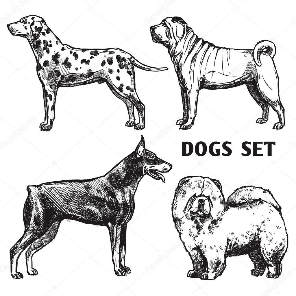 Dibujo Perros Retrato Conjunto Archivo Imágenes Vectoriales