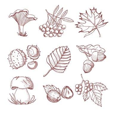 Hand Drawn Autumn Set