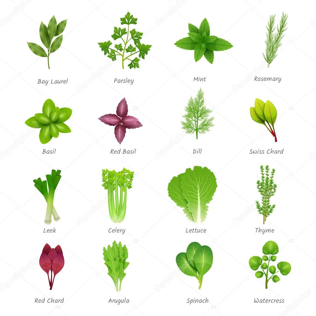Herbs Icons Set