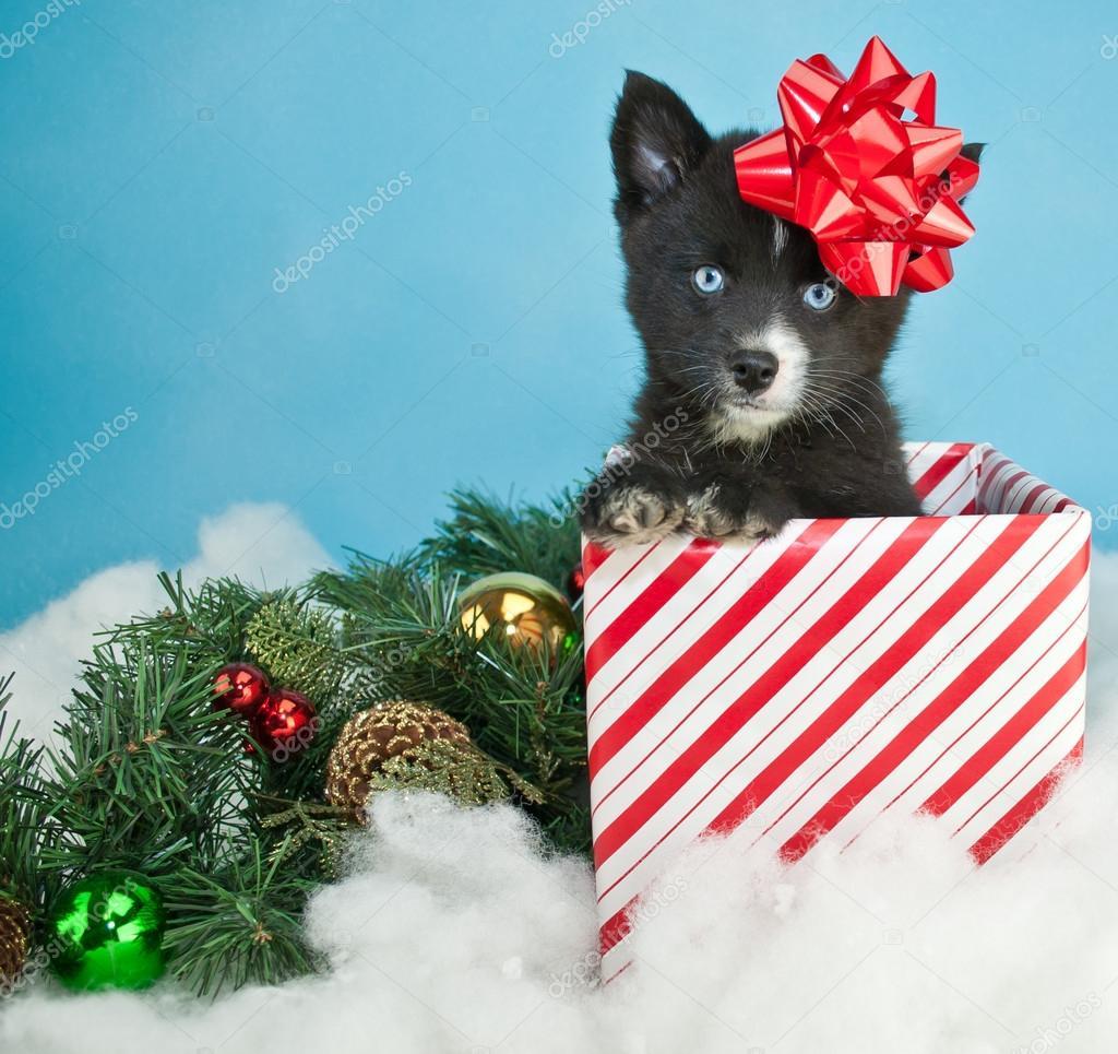 niedlichen Weihnachten Welpen — Stockfoto © Jstaley401 #92078340