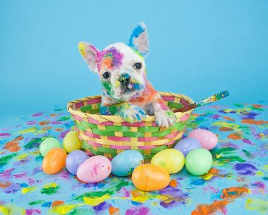 Painted Easter Puppy